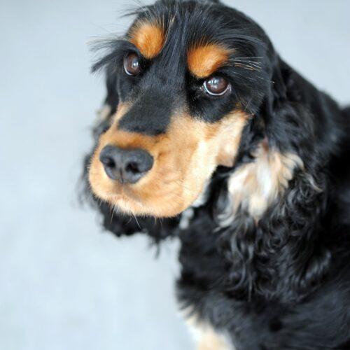 Firmenhund Nala